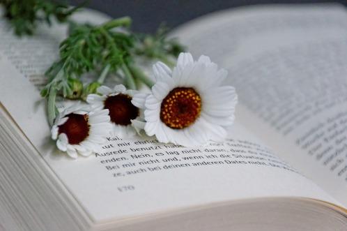 book-2436058_1280